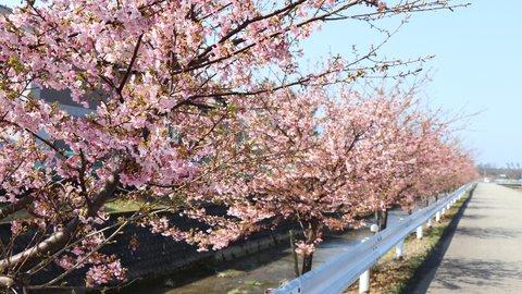石川県「加賀の國」で楽しむ、冬の梅見と周辺おすすめスポット