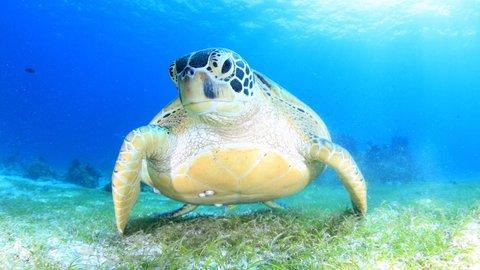 【絶景】かわい子ちゃんとご対面。水中写真家が心奪われた「海中アート」