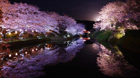 ピンク色に染まる春景色。鳥取県に咲き誇る絶景の「桜の名所」3選