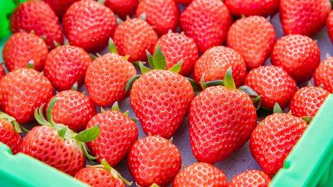 イチゴ食べ放題!人気ホテルで楽しむ期間限定の絶品ランチバイキング