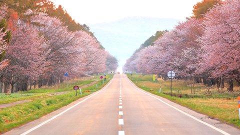 ドライブ旅にも。GWに見ごろを迎える北海道の絶景「桜の名所」7選