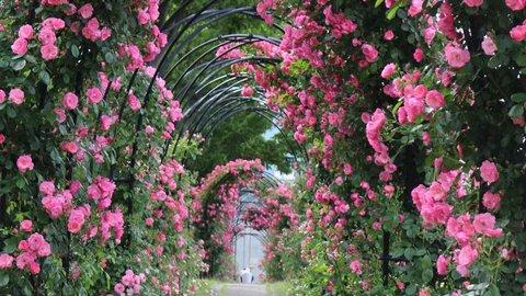 【2021】香しいバラに癒やされる…… バラが美しい京都の素敵スポット