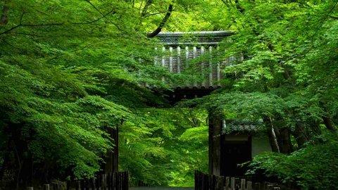 爽やかな初夏の風を感じたいー京都の青もみじの名所