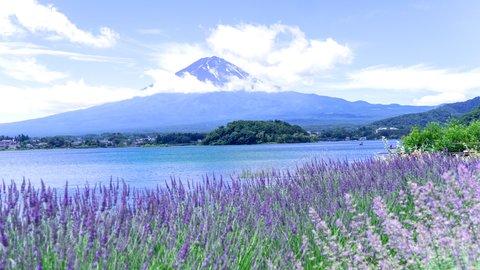 初夏が待ち遠しくなる。関東・東海エリアの絶景「ラベンダー畑」8選