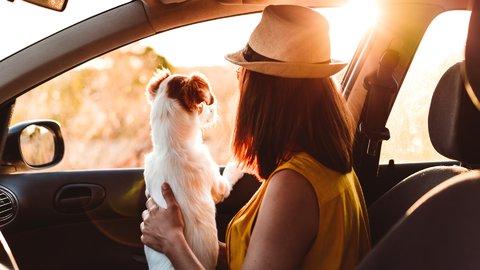 一緒に旅するのは当たり前?飼い主たちの「愛犬と旅行」に関するリアルな声