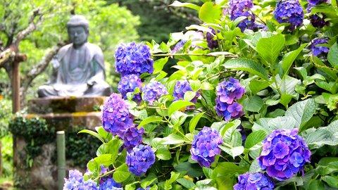 梅雨の時期だけの絶景。鎌倉の紫陽花(アジサイ)名所「明月院」へ