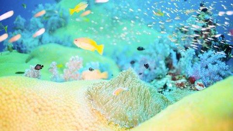 【絶景】この世のものとは思えない…海中に隠された美しさまとう生き物たち