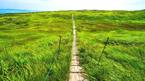 初心者向けトレッキングコースも。天空の楽園、山形県「月山弥陀ヶ原」