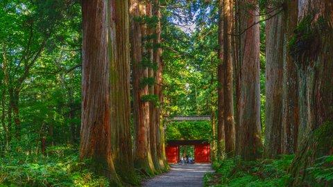 人気のパワースポットでご利益を授かる。神秘的な「戸隠神社」で五社めぐり