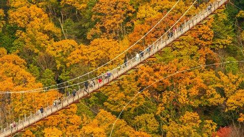 大自然を「星のブランコ」で空中散歩。絶景が広がる大阪「ほしだ園地」