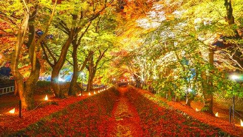 ドライブにも最適。富士山と一緒に楽しめる絶景の「河口湖紅葉まつり」
