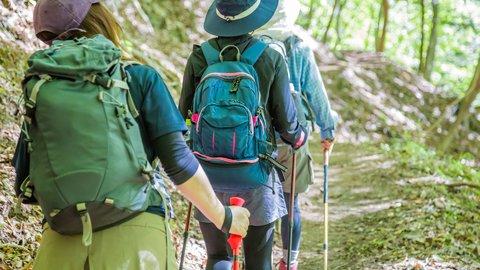 茶畑や大迫力な滝も。自然から癒しをもらう静岡県「高根山」ハイキング