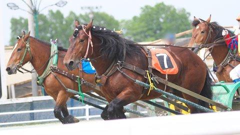 世界で唯一の「ばんえい競馬」を楽しめる帯広競馬場の魅力とは?