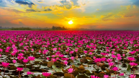 まるで極楽浄土の絶景。現実とは思えないほど美しい「湖」12選