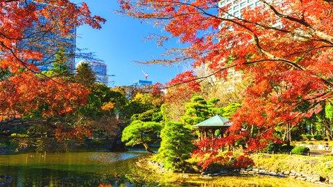 【東京散歩】穴場アリ。千代田区を彩る絶景の「紅葉名所」6選