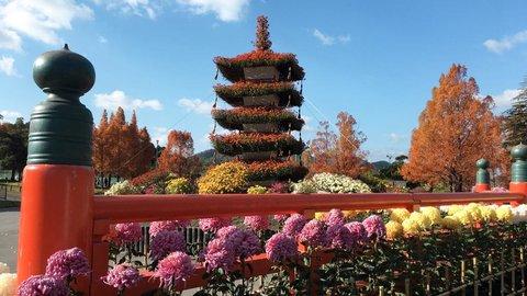 """【2021年】秋の京都で気品に満ちた花を愛でる〜""""菊""""おすすめスポット〜"""