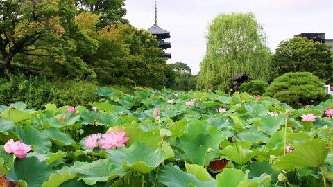 混雑を避けた京都ひとり旅は、神社仏閣めぐりに最適な穴場「九条」がおすすめ